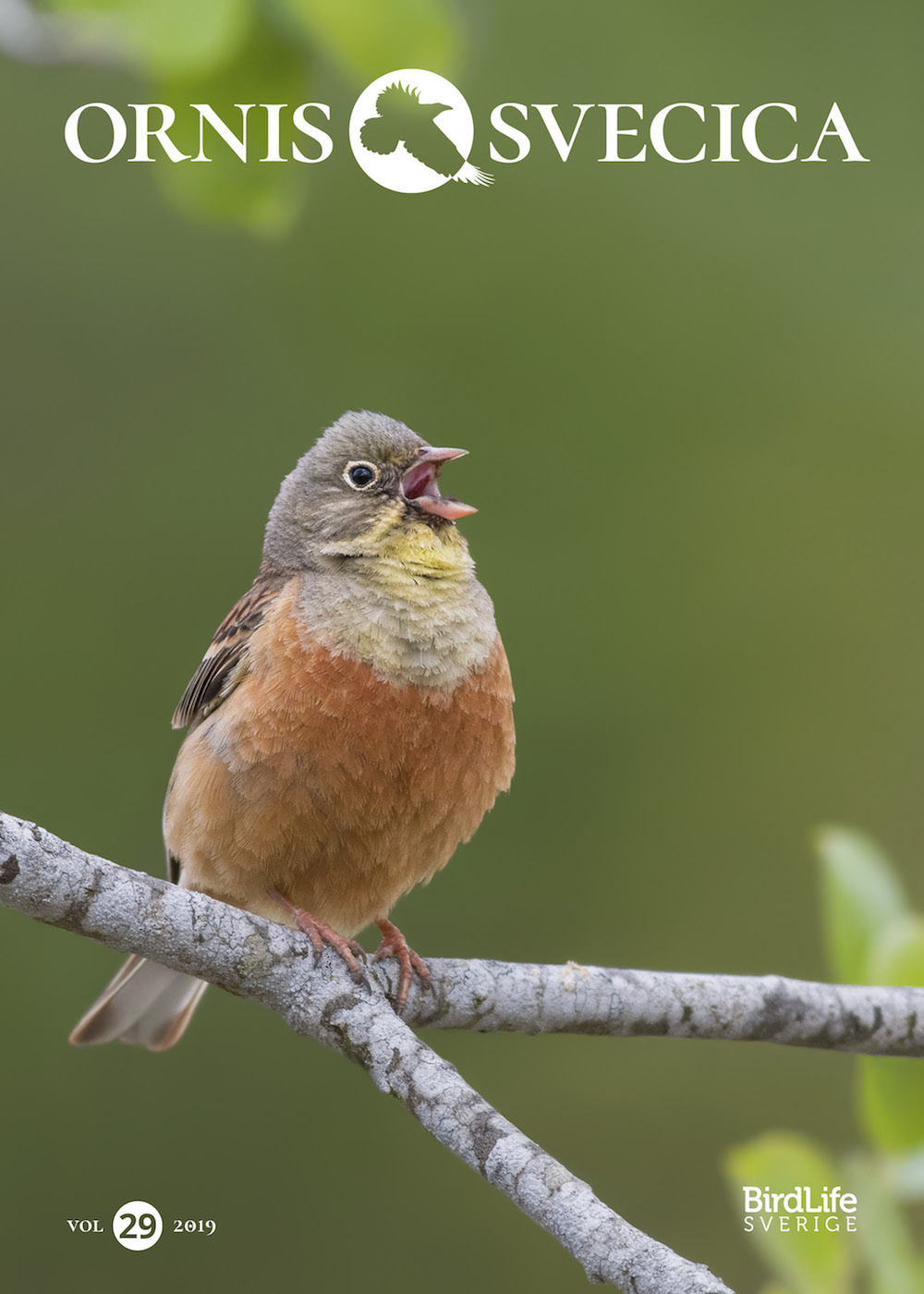 The cover of Ornis Svecica, volume 29, 2019, features an Ortolan Bunting photographed by Ivan Sjögren.